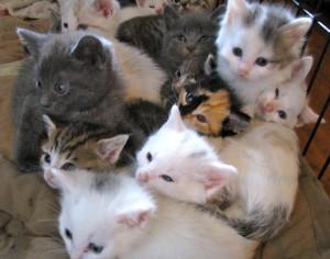 Kitten-Rescue-05172010-300x236
