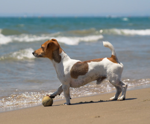 Vacation Checklist for Dog Owners