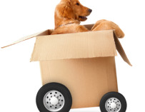How to move house with pets