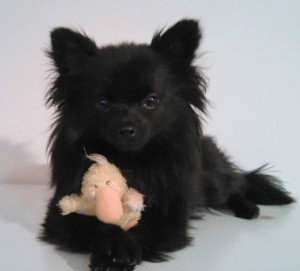 Folly and her duckie!