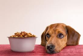 organic-dog-food
