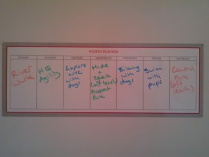 Activity log for the week