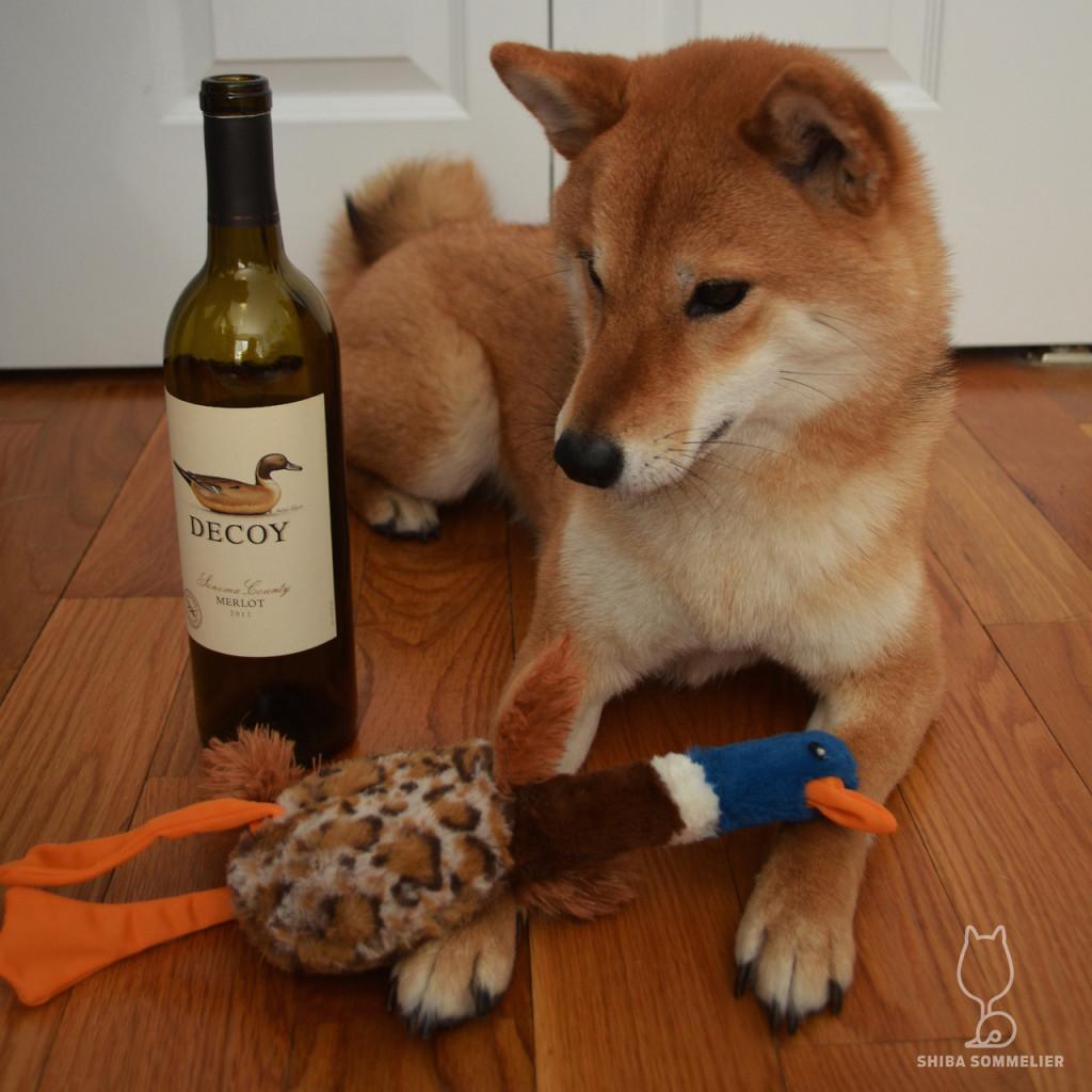 Dog Wine Expert
