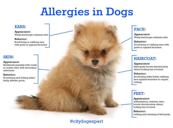 Allergies in Dog