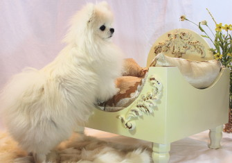 Boudoir Interview starring Sophia Oddo (the most glamorous dog we know)