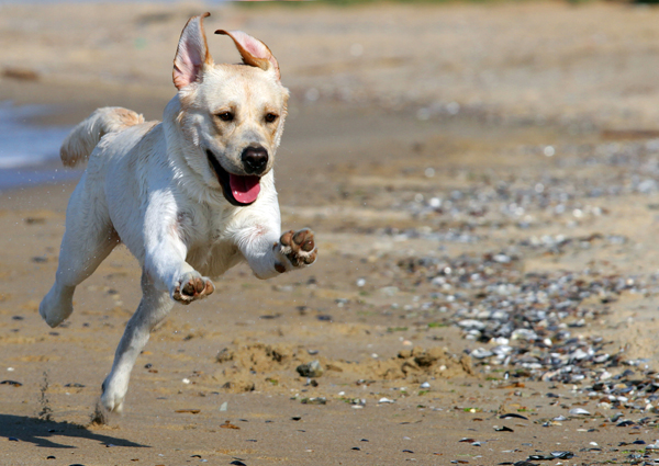 dog-running-beach