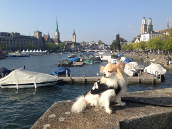 Expert advice on navigating a new City with your Dog