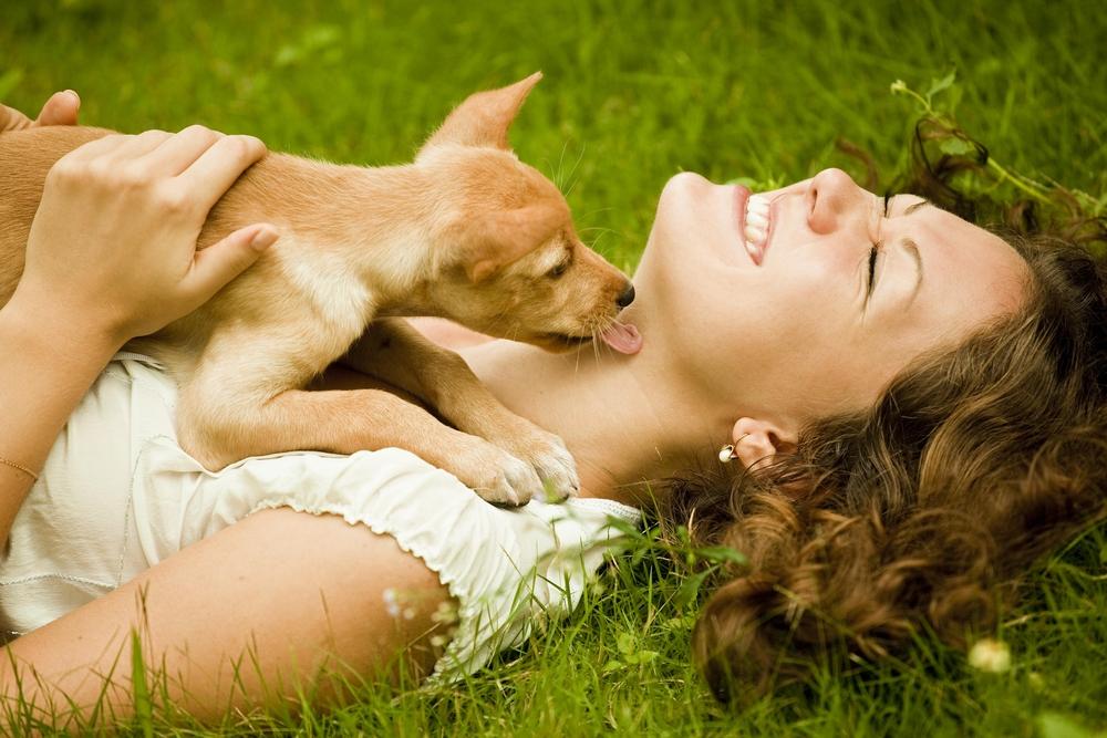 www.puppyhood.com