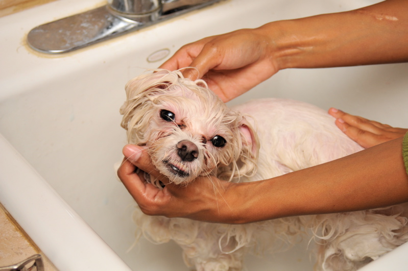 Washing_a_dog_in_a_bath_tub