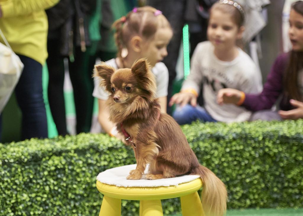 London Pet Show 2015 76