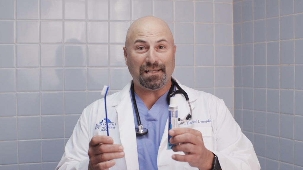 The show's resident Veterinarian is: Dr. Daniel A. Lauridia DVM.
