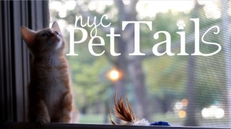 NYC Pet Tails Season 2
