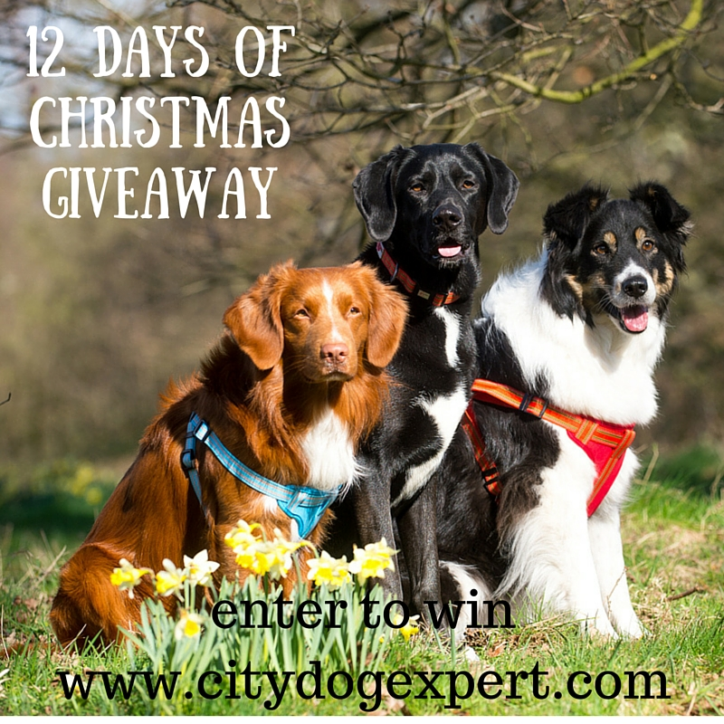 12 Days of Christmas £600 Giveaway- Day 7