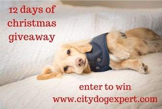 12 Days of Christmas £600 Giveaway