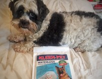 Keeping Everything Clean with Kleen Pet