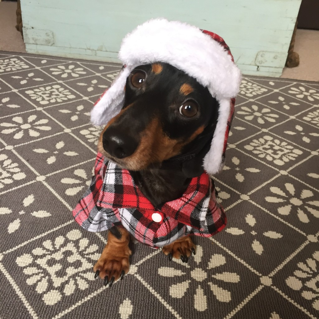 Bruno The Mini Dachshund Boudoir Interview