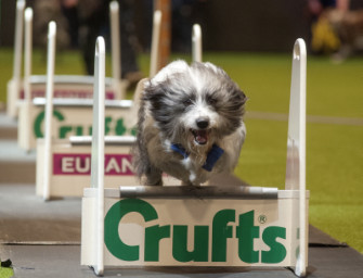 Crufts 5th-8th March