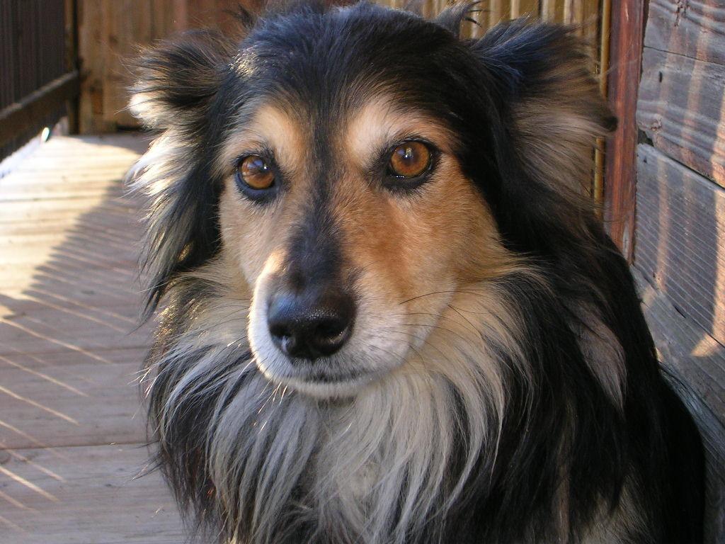 dog-1408320