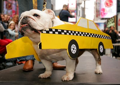 http://citydogexpert.com/wp-content/uploads/2016/06/critter-care-cab-pet-taxi-courior-dog.jpg