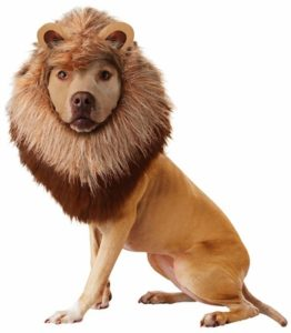animal-planet-lion-dog-costume-x-small-26