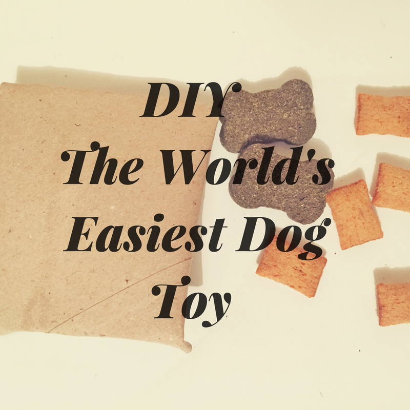 How to make the easiest dog toy ever