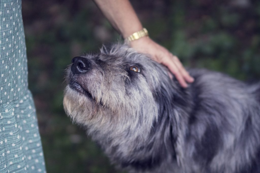 How to Help Seniors Take Care of Their Pets