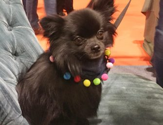 The National Pet Show Review