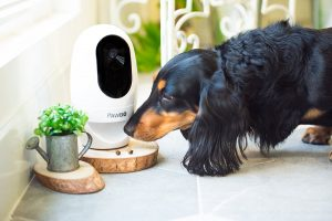 Dog Apartment Hack Pet Camera