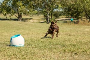 Dog Apartment Hack Games for Dogs