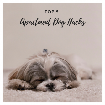 Dog Apartment Hacks