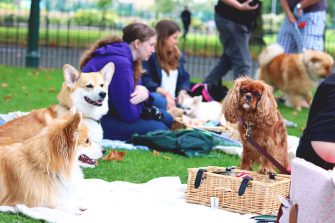 Doggy Picnic in the Park