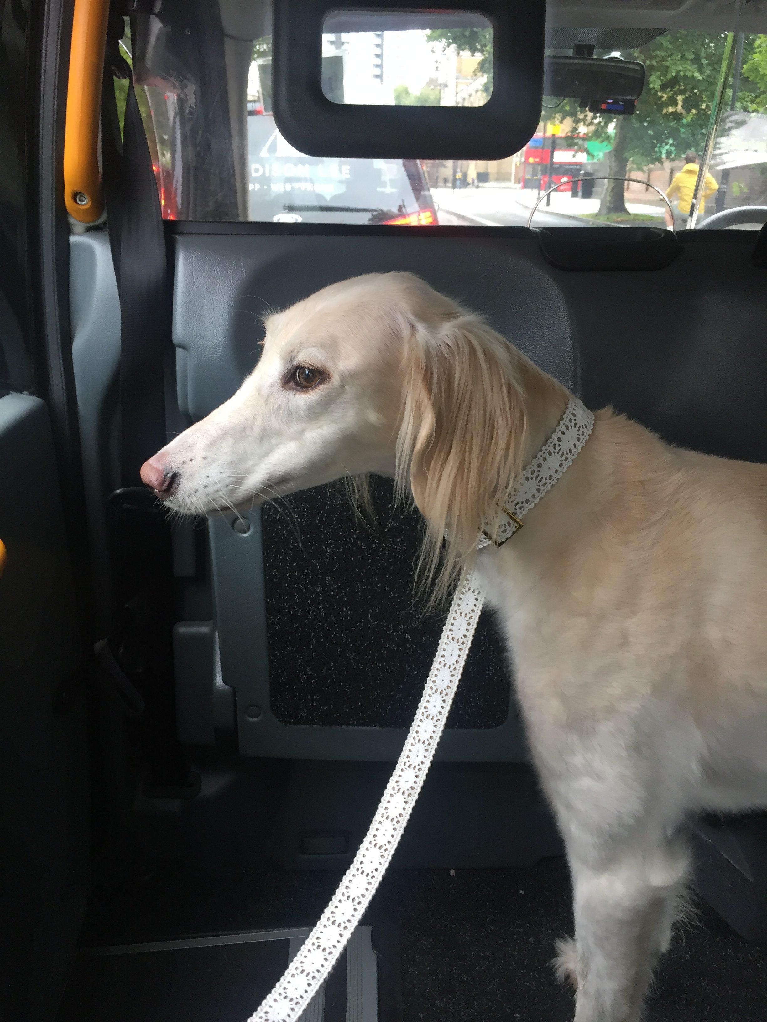 Dog Blanket For Car >> City Dog Etiquette - City Dog Expert