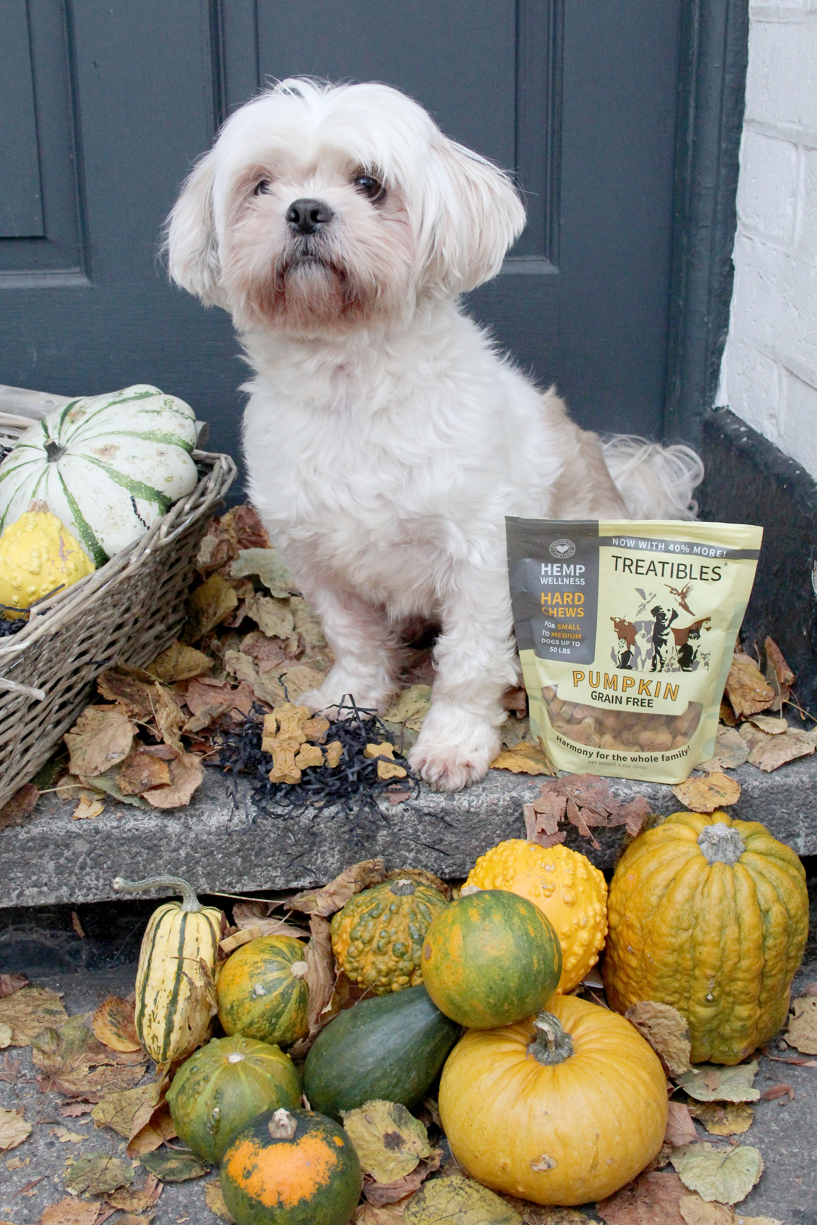 Houdini the dog with Treatibles CBD oil treats