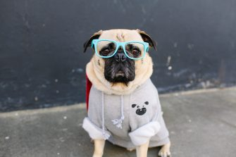 Boudoir Interview: Honey I Dressed The Pug