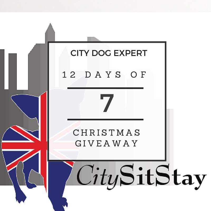 7th Day of Christmas- Dog Training