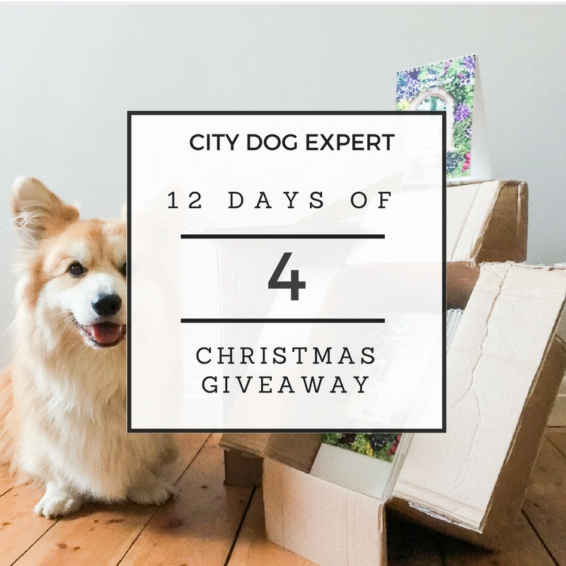 4th Day Of Christmas Giveaway- Marcel Le Corgi Calendar