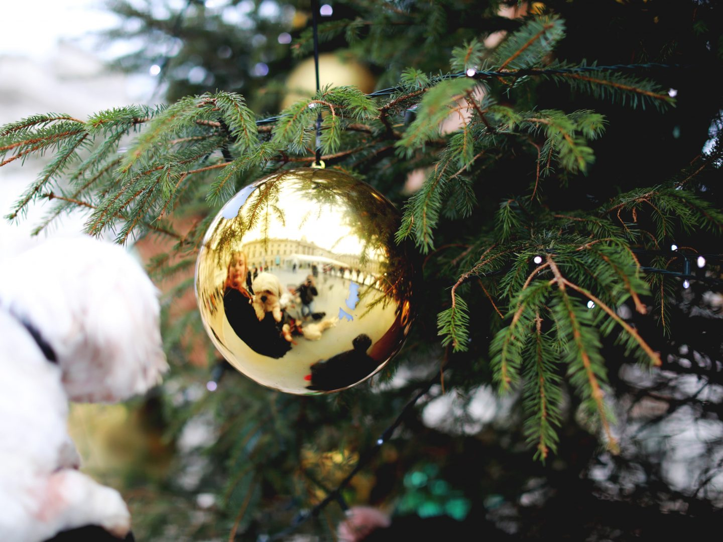 Christmas Meal Dangers for Dogs