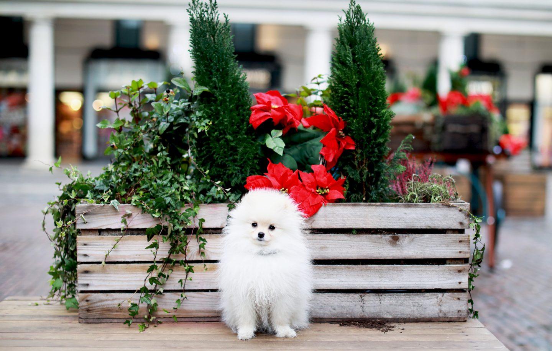 Dog Christmas Markets- LONDON