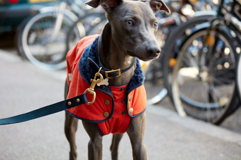 Dogs + Design by Fetch & Follow