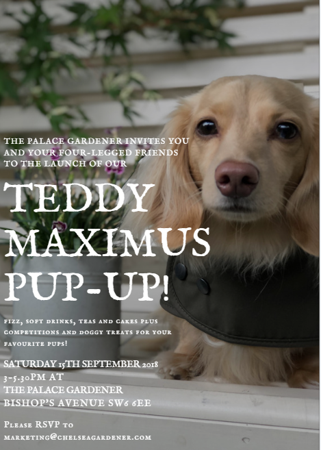Teddy Maximus New Collection and Pop Up