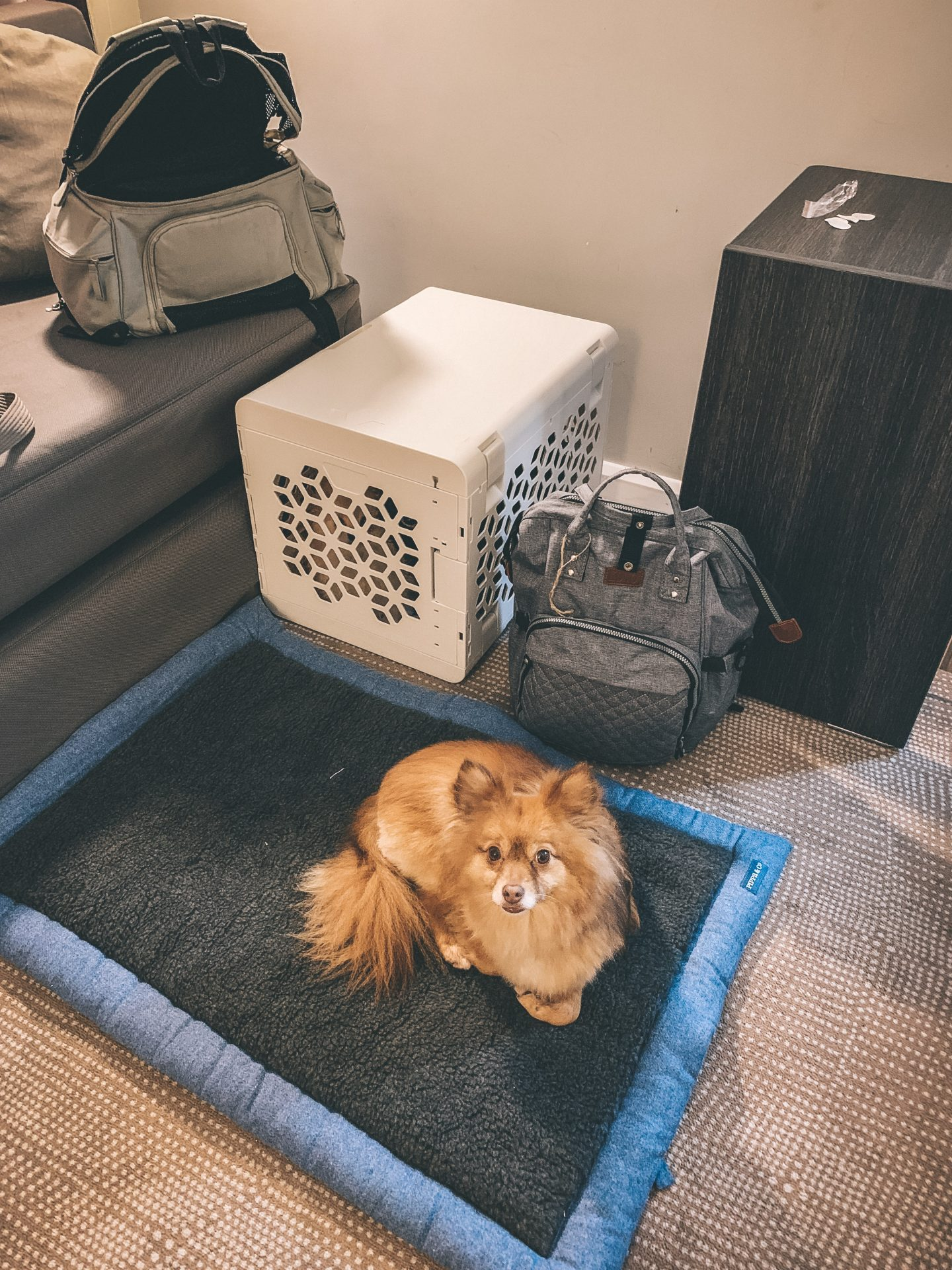 How to Pack for a City Break with your Dog