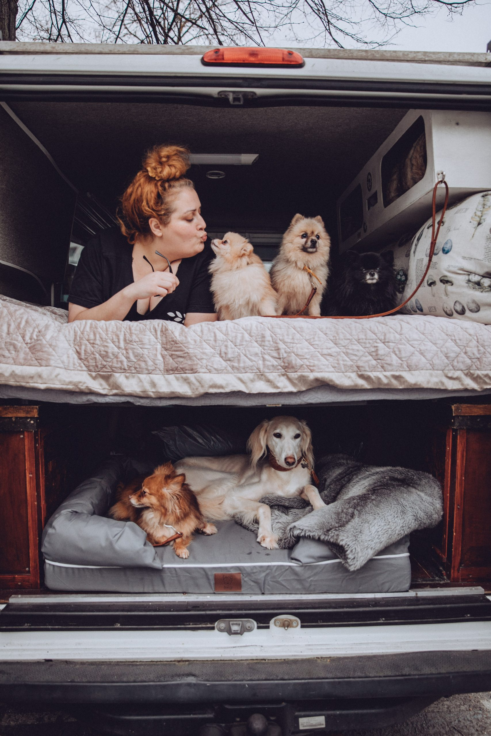5 Dogs in the Campervan in their Bunty bed