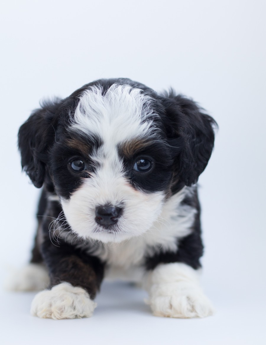 picture of puppy for toilet training