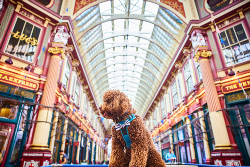 Photo of dog at leadenhall market - Photo station for dogs