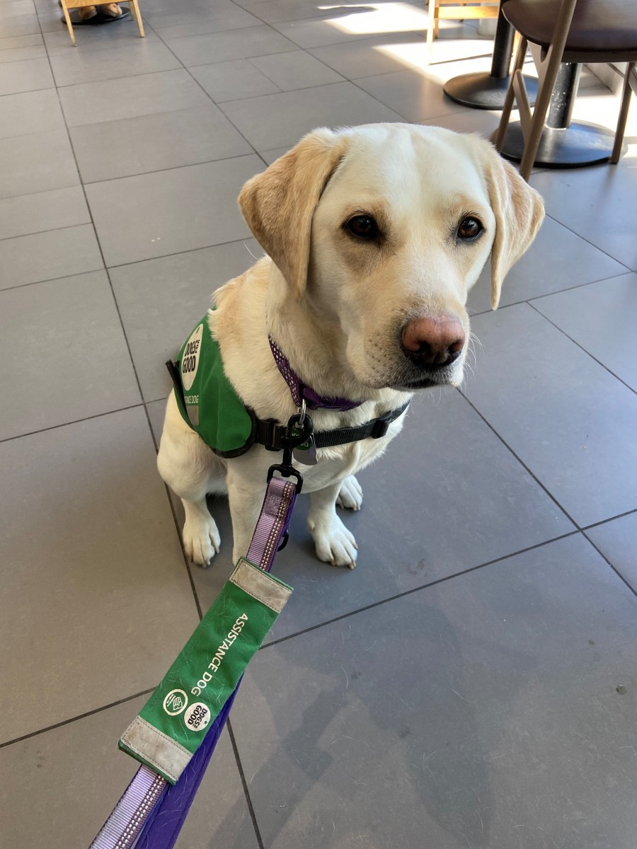 Assistance dog Vila
